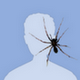 webdeveloper35