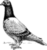 lyublue